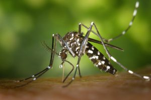 4 effective natural mosquito repellents in Nigeria